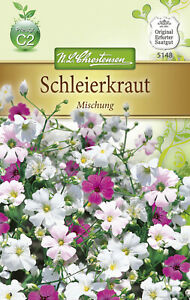 Schleierkraut Samen Mischung Gipskraut  Rosa weiß  Schleierkrautsamen Pflanze