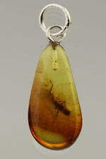 Huge Fossil Insect COLLEMBOLA Genuine BALTIC AMBER Silver Pendant 0.5g 180807-13
