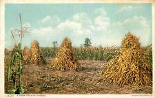 Postcard A Corn Field in Kansas - Detroit Publishing Company 11420