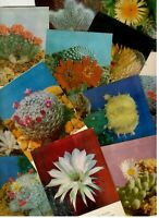 Cacti bloom. A set of 18 colored Soviet postcards.1978. Rarity.
