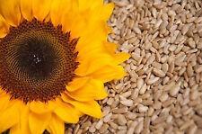 5 kg Geschälte Sonnenblumenkerne Top Qualität 5000g Sonnenblumen Kerne