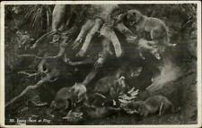 Animals Natures Young Fox Foxes at Play c1910 Real Photo Postcard