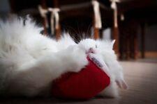 4cats Cuddly Heart –  Single catnip toy