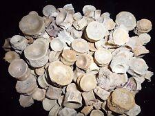 10 Fische und Haifischwirbel Khouribga Marokko fossilien haizahn era fossil