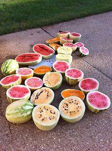 WATERMELON Heirloom Mix 15+ seeds heirloom NON GM vegetable garden UNUSUAL RARE