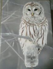 Snow Owl Boxed Holiday Half No NEW