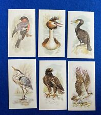 More details for british birds collection john player grandee mint condition  set of 32 cards