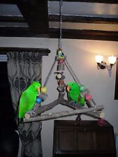 large parrot bird swing / toy African grey amazon eclectus macaw cockatoo