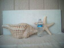Ceramic Sea Shell And Starfish