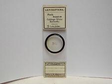 MICROSCOPE (MICROSCOPE SLIDE) FLATTERS & GARNETT (BUTTERFLY) PIERIS BRASSICAE