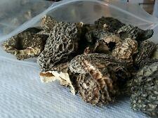 Northwest territories dry Morel mushrooms one pound