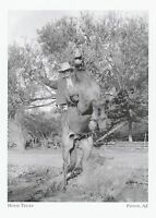 "*Arizona Postcard-""Horse Tricks""  -*Payson- (A325)"