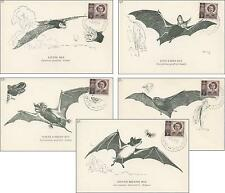 5 philatelic postcards AUSTRALIAN NIGHT BATS, collected by Victor during 1950's.