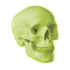 Skull Model Glow in the Dark Neon Green  Anatomical Model Brand New never used,
