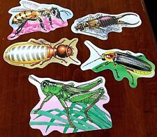 5 LAMINATED VINTAGE INSECTS GRASSHOPPER HONEYBEE CLASS BULLETIN BOARD POSTER SET