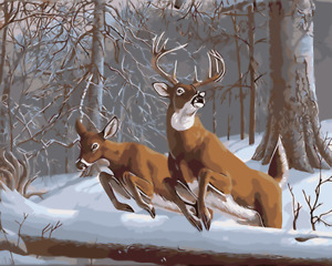 Paint By Numbers Kit 50*40cm 8108 Snow Deers AU Shipping Landscape / Flowers