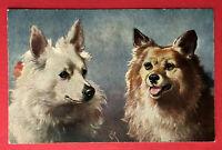 Künstler AK von Carl Reichert um 1930 Hunde Spitze    ( 66534