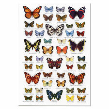 British Butterflies Butterfly A5 Identification Card Chart Postcard NEW