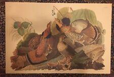 "John J Audubon 26"" x 39 1/2"" Vintage RUFFED GROUSE authentic Amsterdam print"