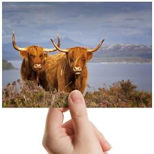 "Highland Cows Scotland Cattle Small Photograph 6""x4"" Art Print Photo Gift #16313"