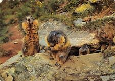 BR89049  marmot marmotte bau austria   animal animaux