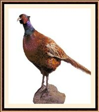 Pheasant, Cross Stitch Kit