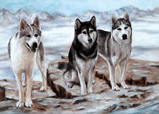 "SIBERIAN HUSKY SLED DOG DOG FINE ART LIMITED EDITION PRINT - ""Snow 'n' Ice"""
