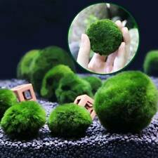 3-4cm Giant Marimo Moss Ball Cladophora Live Aquarium Plant/Fish Aquarium Decor