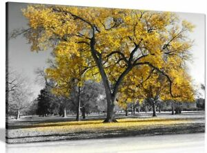 Large Tree Yellow Leaves Black White Nature Canvas Wall Art Picture Print