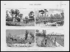 1885 Antiguo Imprimir-Ee. UU. Florida labor drenaje pantano Creek Naranjo (98)