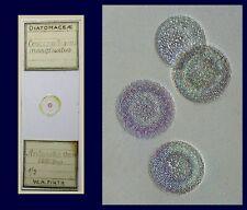 Antique Microscope Slide ~ Selected Diatoms Coscinodiscus Antarctic ~ WA Firth