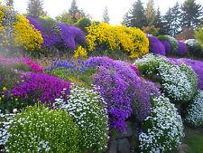 Alpines - ROCKERY GARDEN MIXED FLOWER SEEDS - 0.5 g Seeds of this year FRESH !