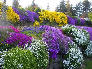 Alpines Perennial - ROCKERY GARDEN MIXED FLOWER SEEDS - 0.5g - SEEDS