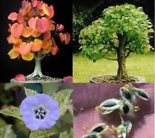 schnellwüchsige Duftbäume - Duftpflanzensortiment frische Düfte für die Wohnung