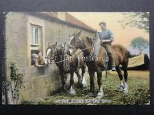 Country Scene SHIRE HORSE AT HE END OF THE DAY c1906 by Wildt & Kray 704 F