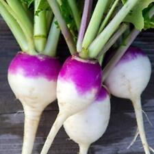 1200+ Turnip Seeds   Non-GMO Organic Vegetable Garden Seeds