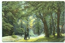Horse Carriage Fairmead Epping Forest Essex unused 1900s postcard