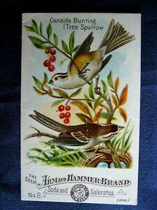 Victorian Trade Card Arm & Hammer Church #18 Canada Bunting TERRIFIC Bird 6C