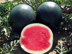 Seeds Rare Watermelon Black Beauty Vegetable Planting Organic Heirloom Ukraine