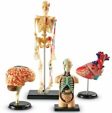 HUMAN ANATOMY STUDENT MODEL HEART BRAIN SKELETON  EDUCATIONAL SET REALISTIC NEW
