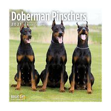2021 Doberman Pinschers Wall Calendar by Bright Day, 12 x 12 Inch, Cute Dog P.