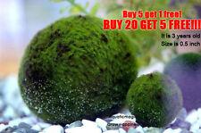 Japan Nano Marimo Moss Ball-Ship from SINGAPORE! Buy 5 FREE 1!