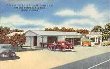 Largo Florida Orange Blossom Groves Linen Antique Postcard K56216