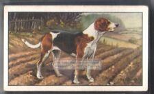 Fox Hound Dog 75+ Y/O Ad Trade Card