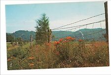 Mountain Roadside Wildflowers Barbed Wire Fence VA Postcard Virginia KOPPEL