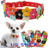 Flower Dog Collar Cute Leather Studded Dogs Necklaces Pet Collars For Small Dogs