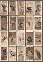 1926 Lloyd & Sons Cigarettes Zoo Series Tobacco Cards Complete Set of 25