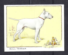 1934 Uk Dog Art Full Body Gallaher Cigarette Large Trade Card White Bull Terrier