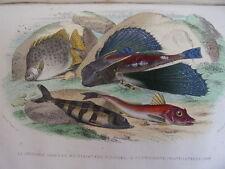 HISTOIRE NATURELLE DES POISSONS ( 1798-1803) LACEPEDE 8 planches coloriées 1850