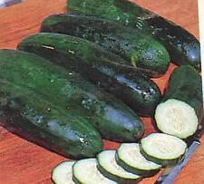 Cucumber Marketmore 76 Vegetable Seeds